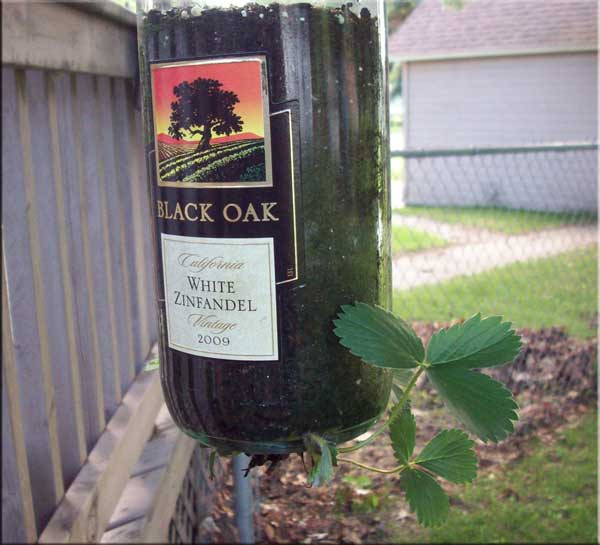 Wine Bottle Strawberry Plant Holder