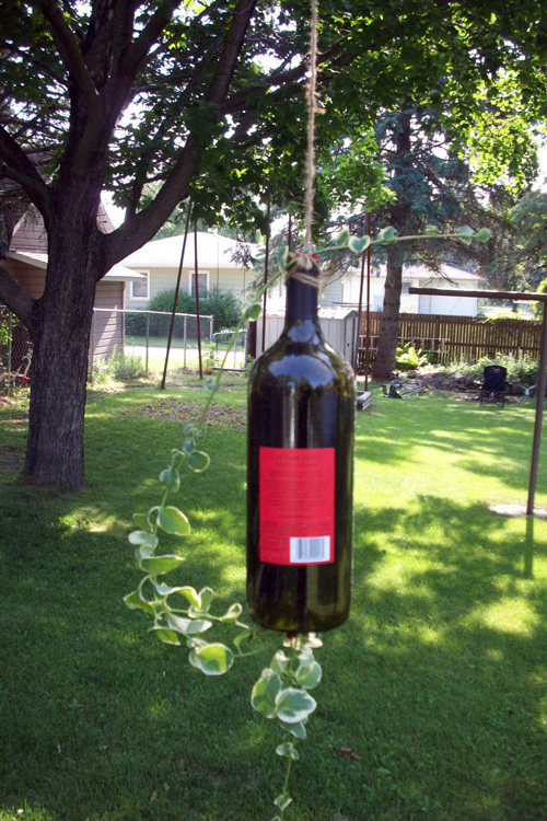 Vica Vine in a recycled Wine Bottle