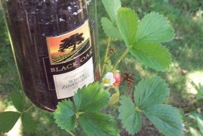 recycled bottle plant holder for strawberries