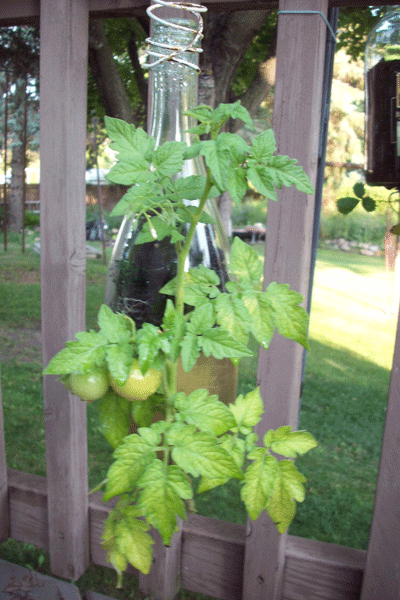 Glass bottle plant holder